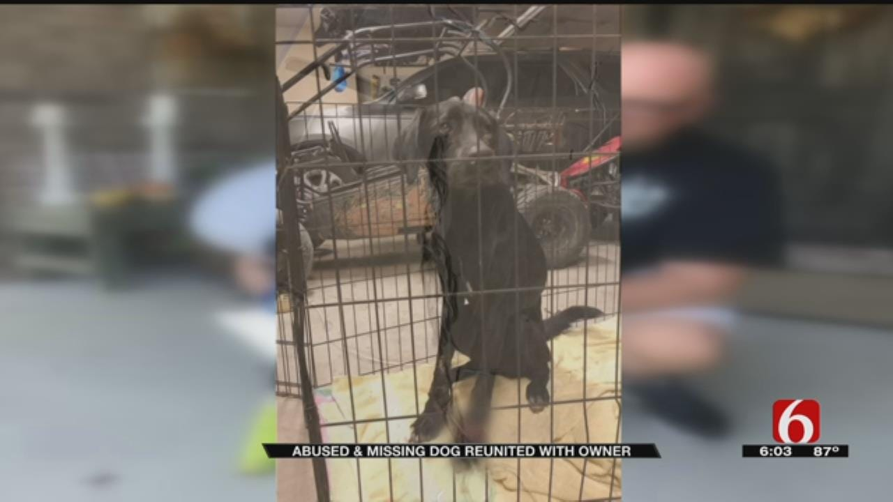 Dog Found Tied Up Under Green Country Bridge Reunited With Owner