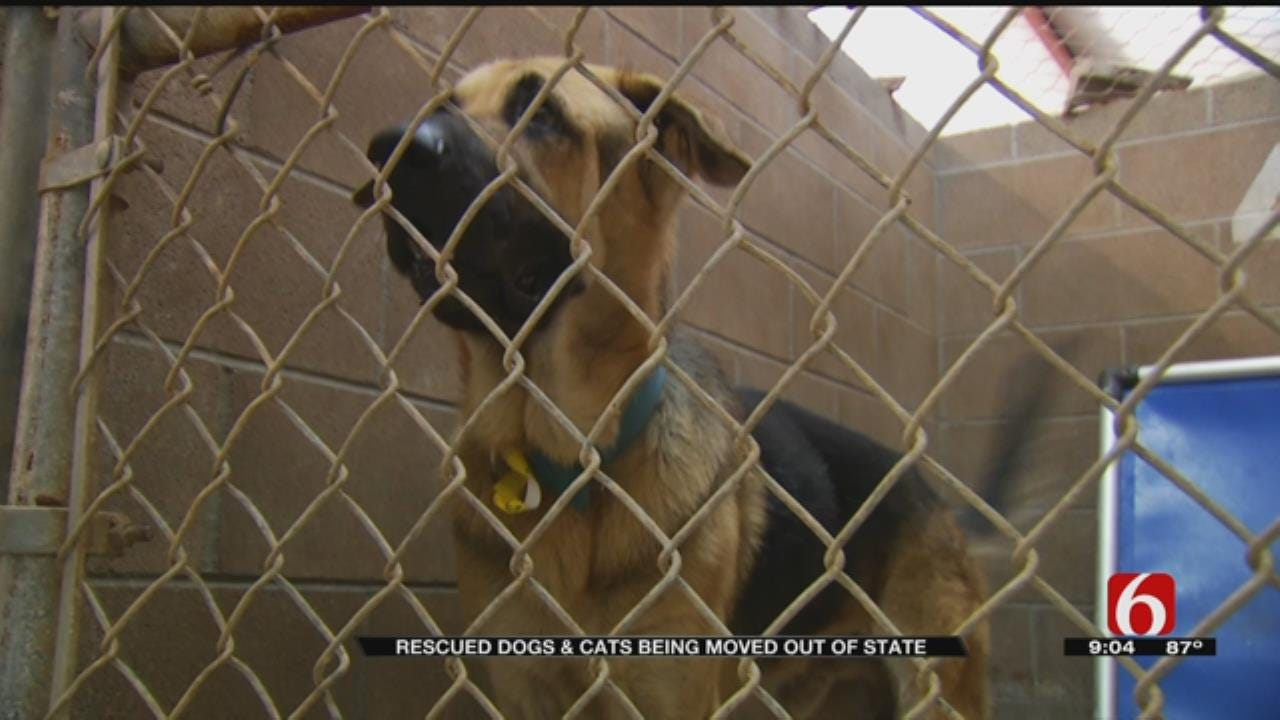 Humane Society Of Tulsa Transports 120 Pets Rescued From Harvey