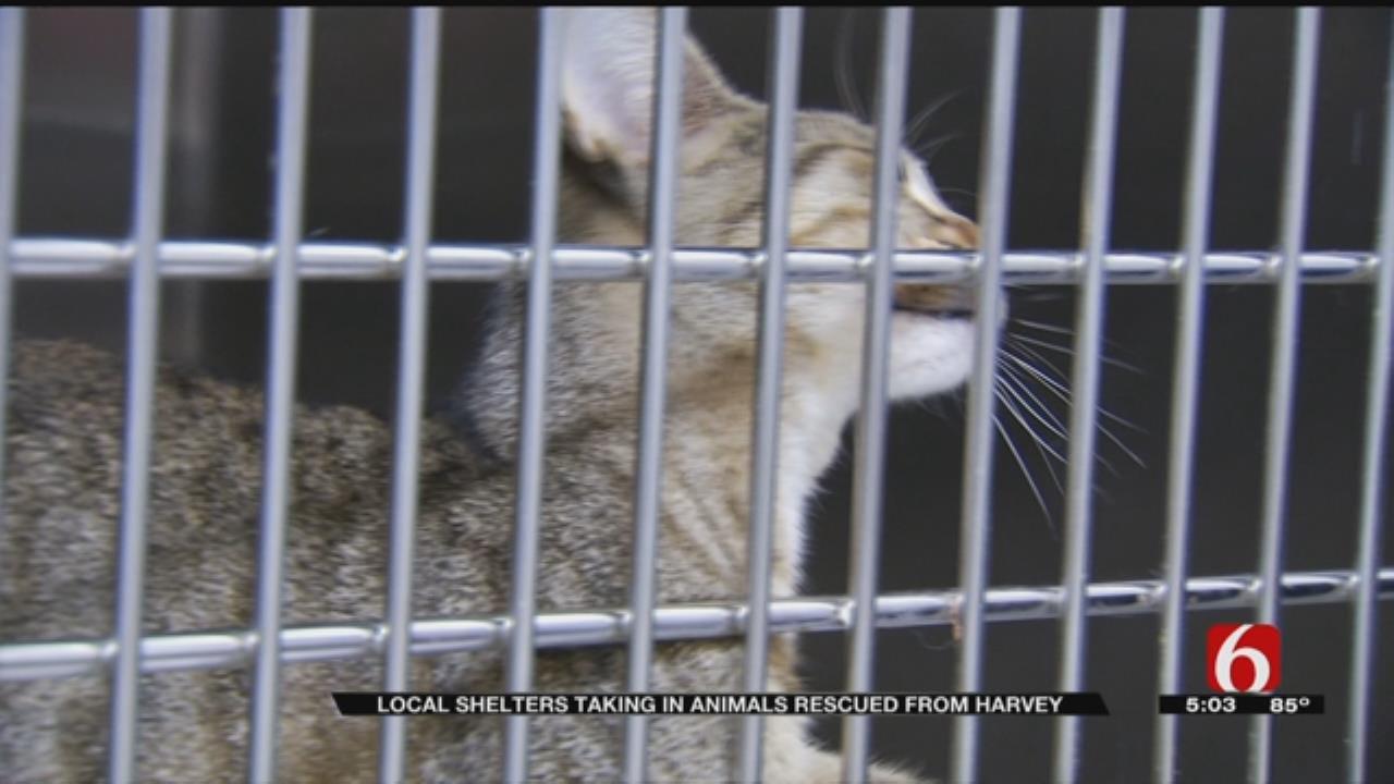 Hurricane Harvey Displaced Pets Arrive In Bixby
