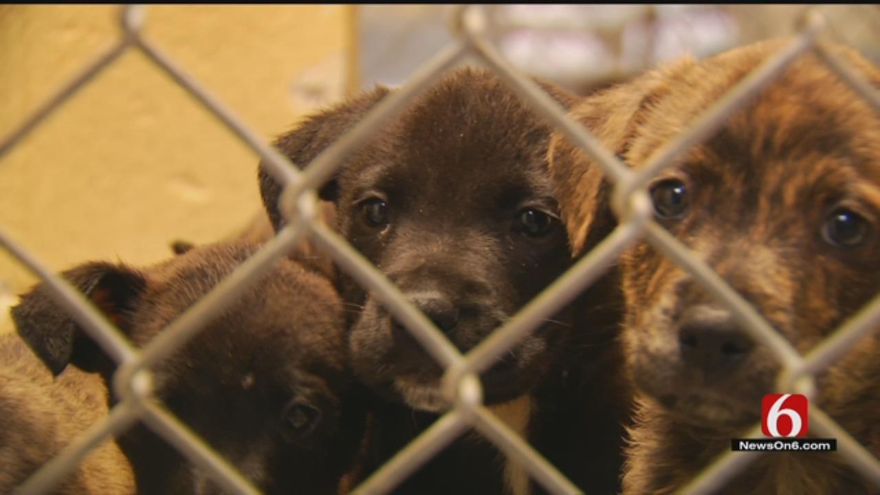 Tulsa Animal Welfare Holding Adoption Event Saturday
