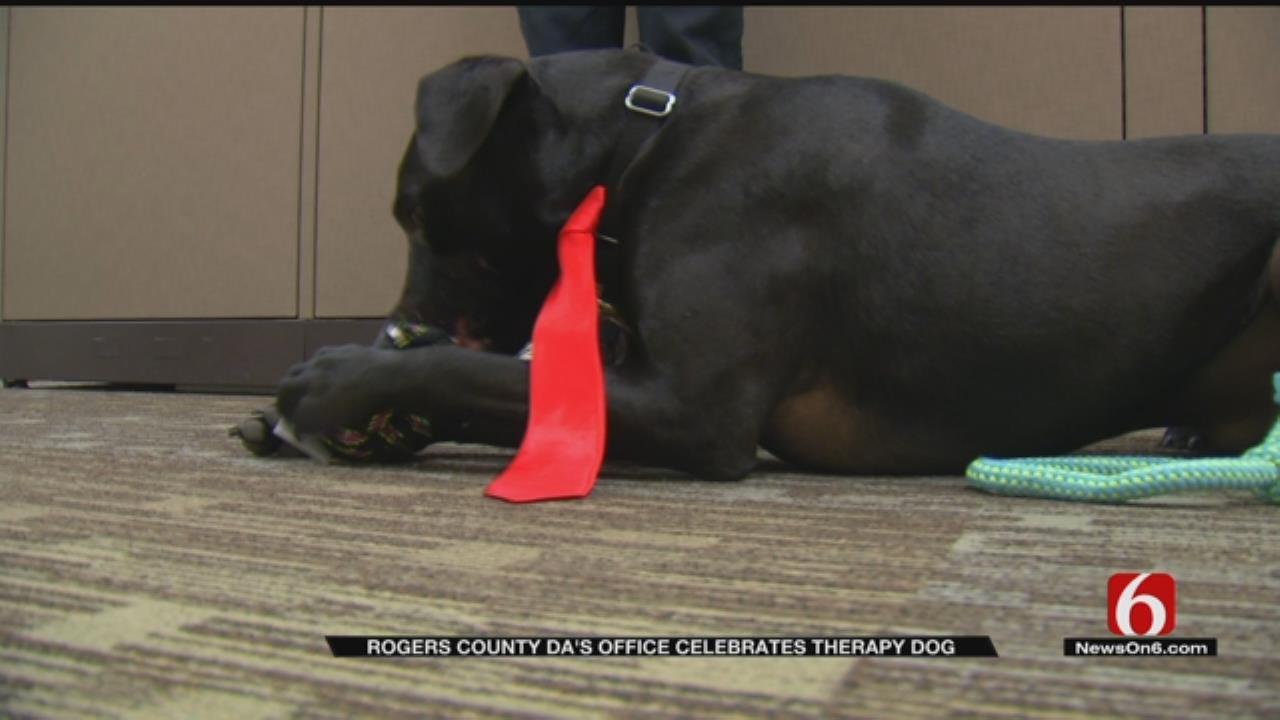 Rogers Co. Court Dog Celebrates Birthday