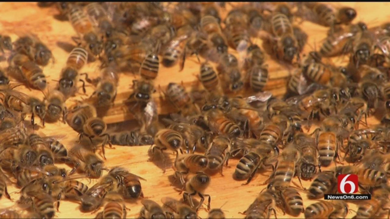 Tulsa Zoo Creates Plan To Keep Swarms Of Bees, People, Safe