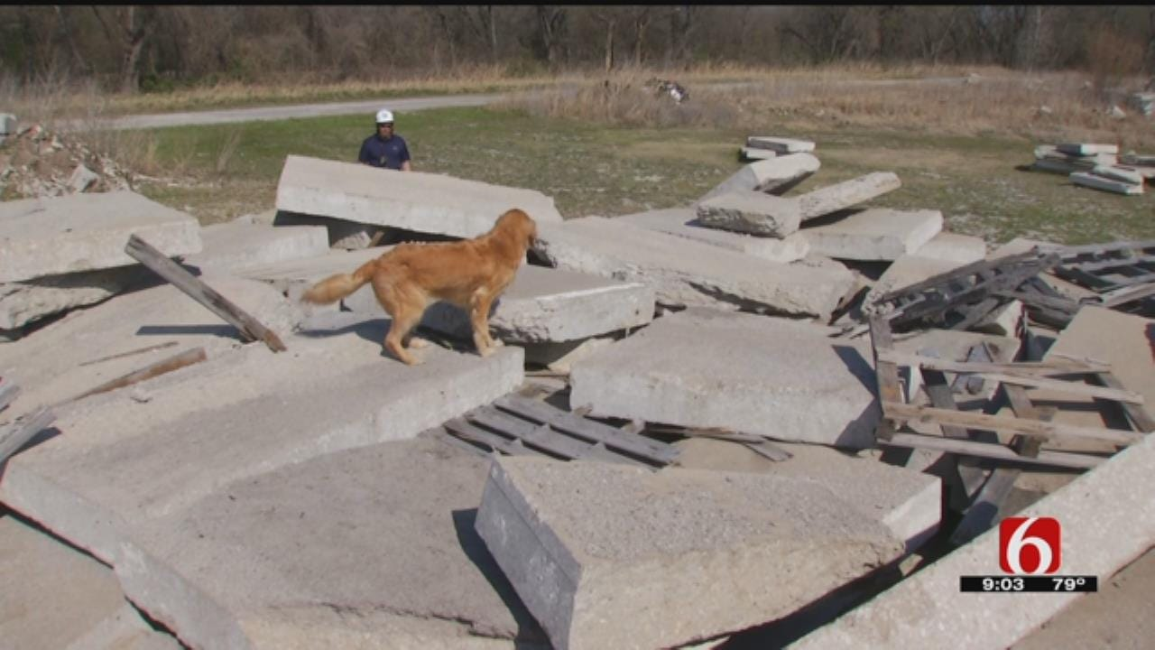 Search-And-Rescue Dogs Come To Tulsa To Train For Disasters