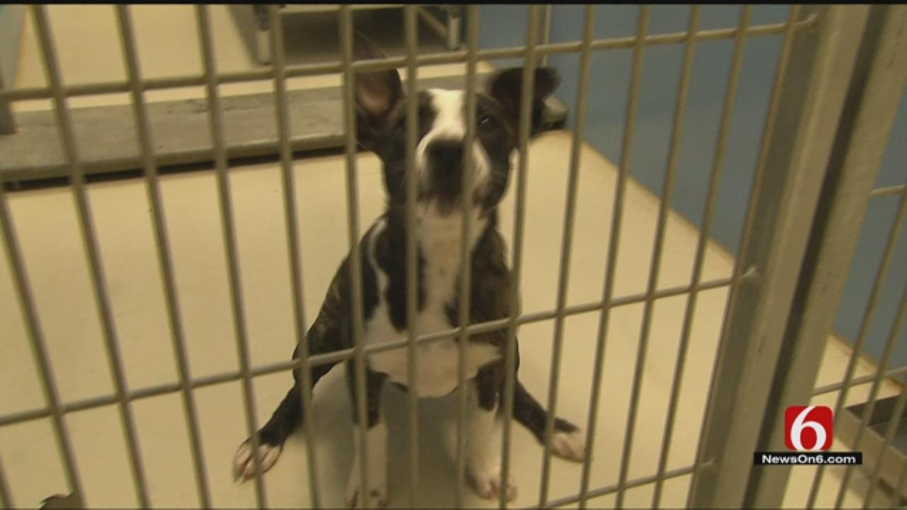BA Animal Shelter Offers Free Adoptions During Weeklong Event