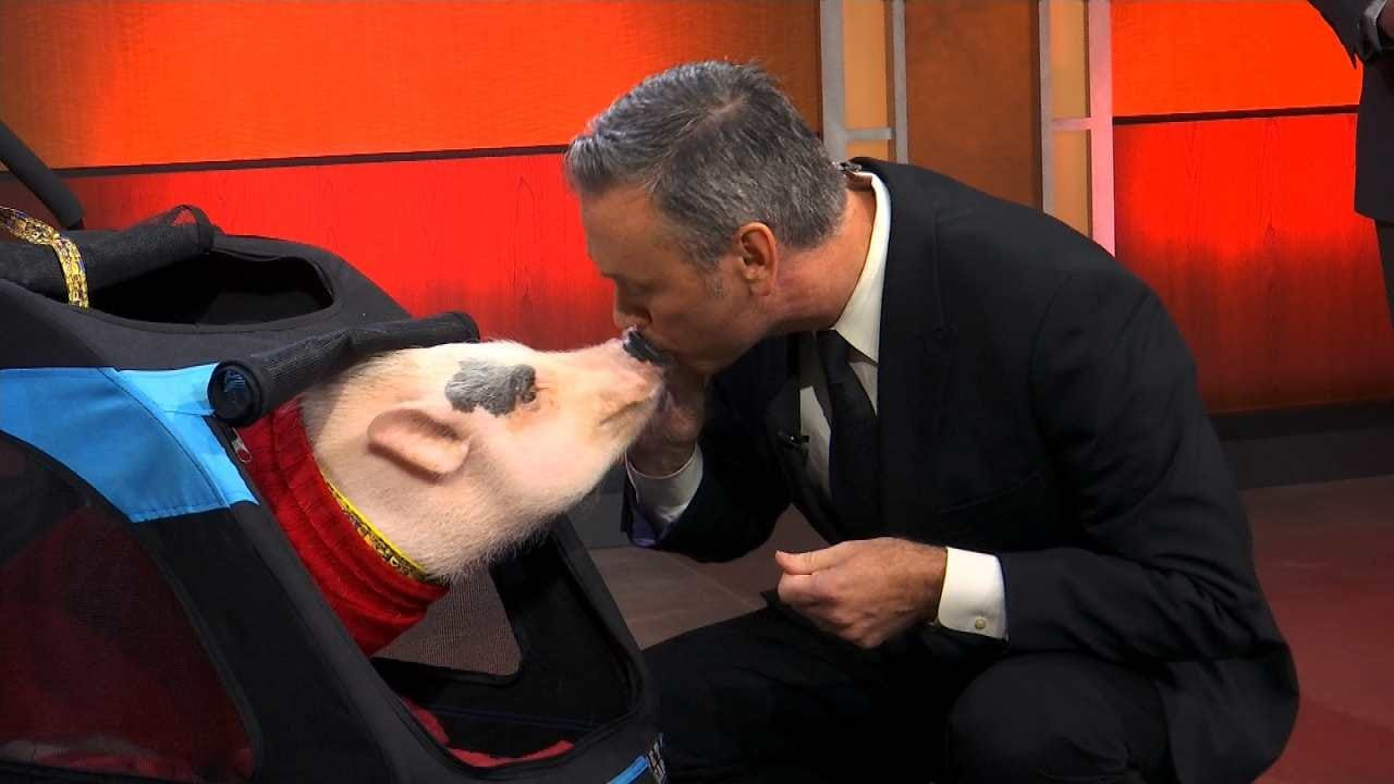 Watch Meteorologist Alan Crone Kiss Raisin The Pig On 6 In The Morning