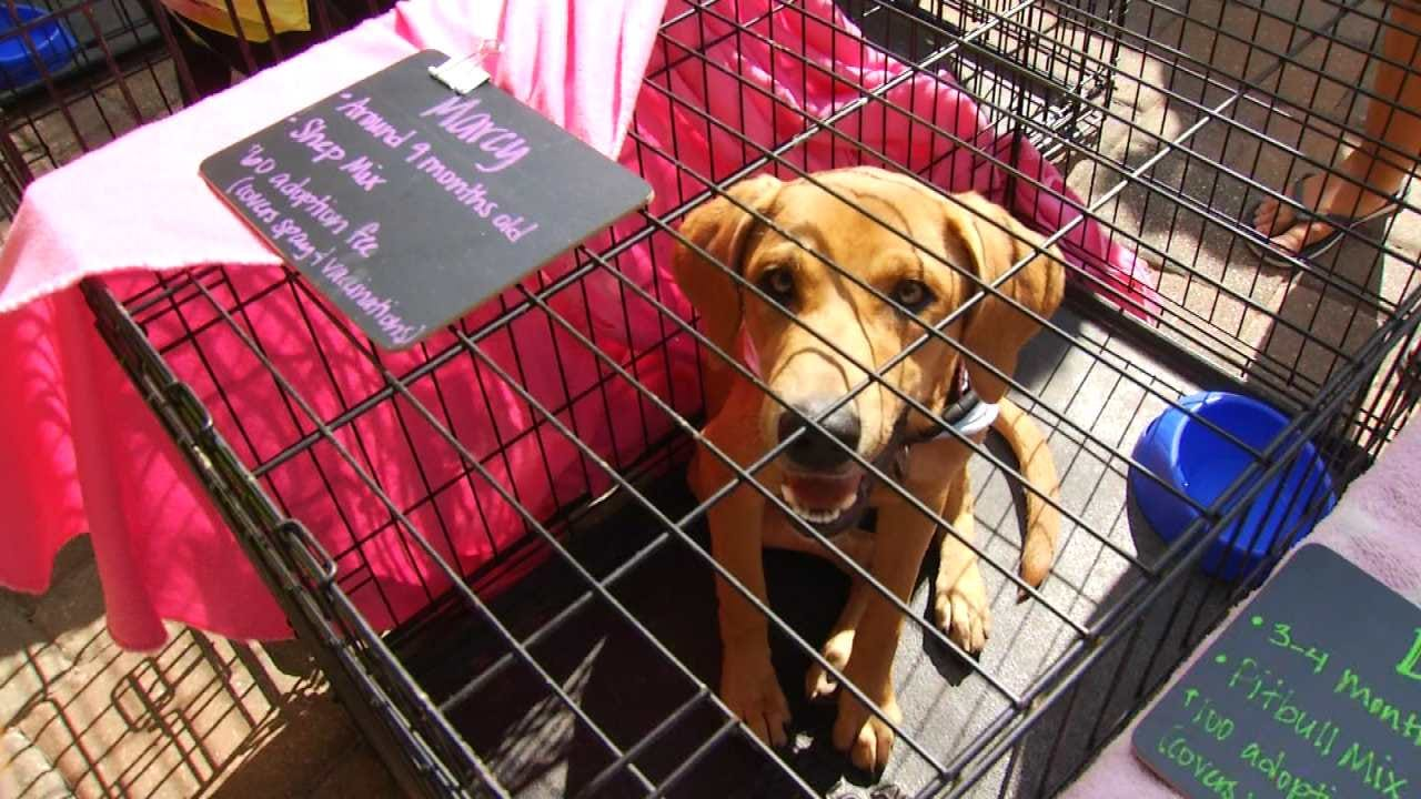 Animal Rescue Groups United For Woofstock In Jenks