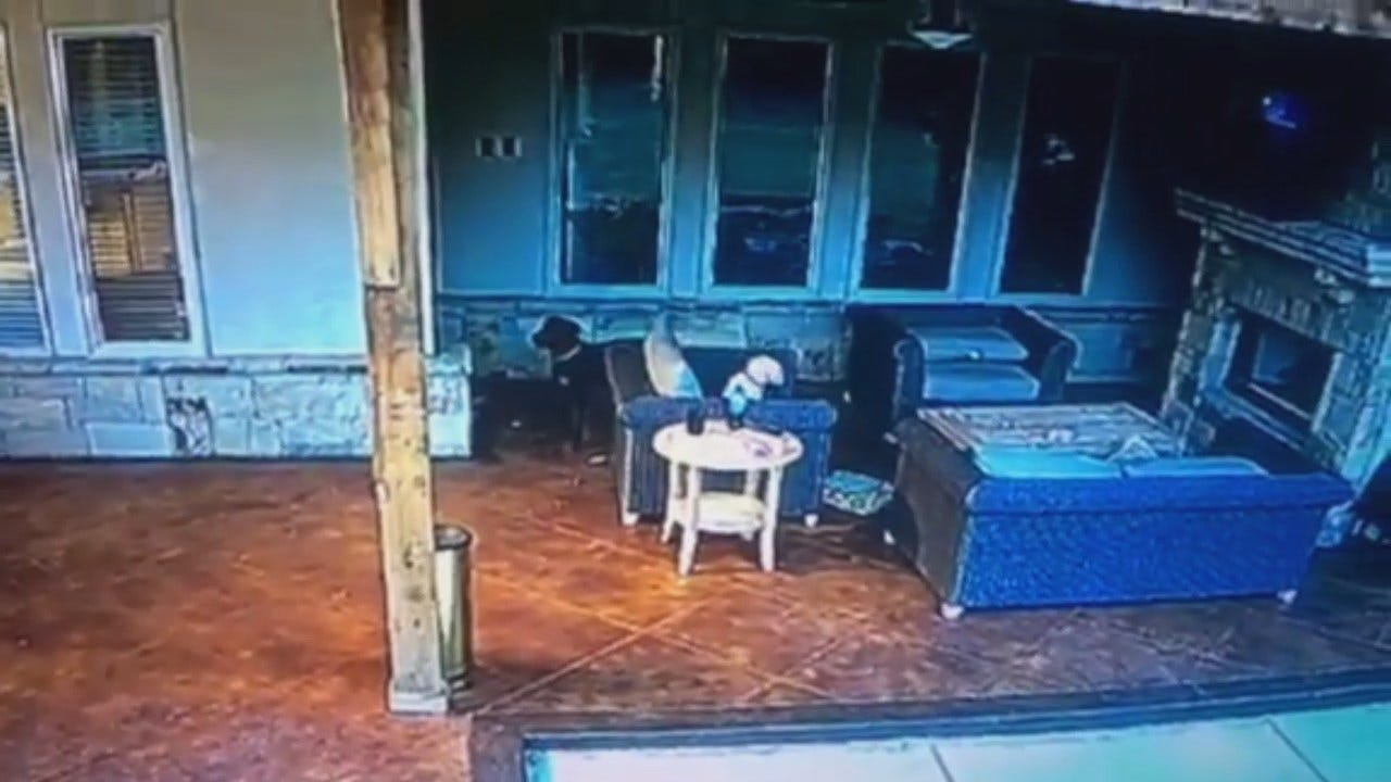 WEB EXTRA: Security Camera Video Of Dogs Sensing Earthquake