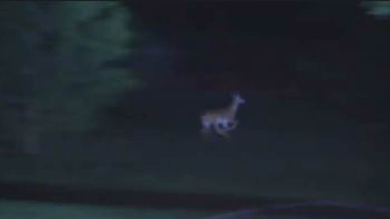 Deer Surprises Osage County Deputies Searching For Suspect