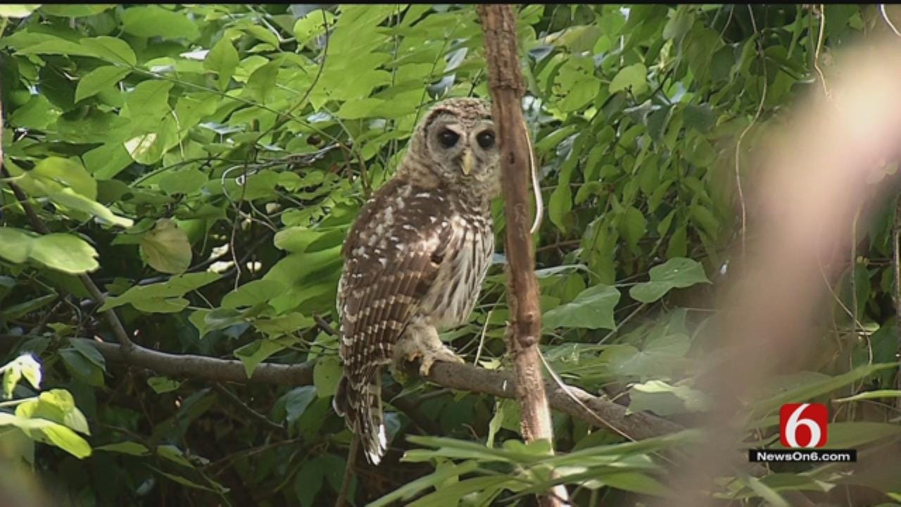 Midtown Homeowners Argue Church's Expansion Plan Puts Owls At Risk