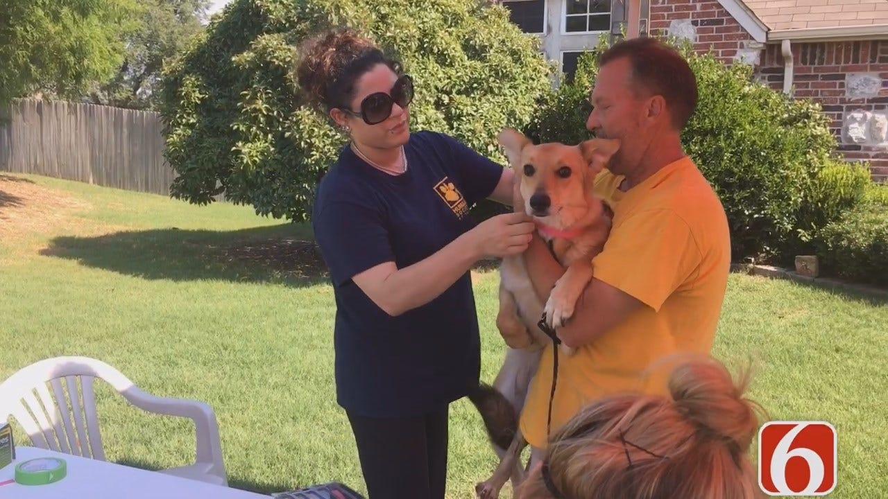 Tess Maune Goes On Dog Rescue Mission With Tulsa Humane Society