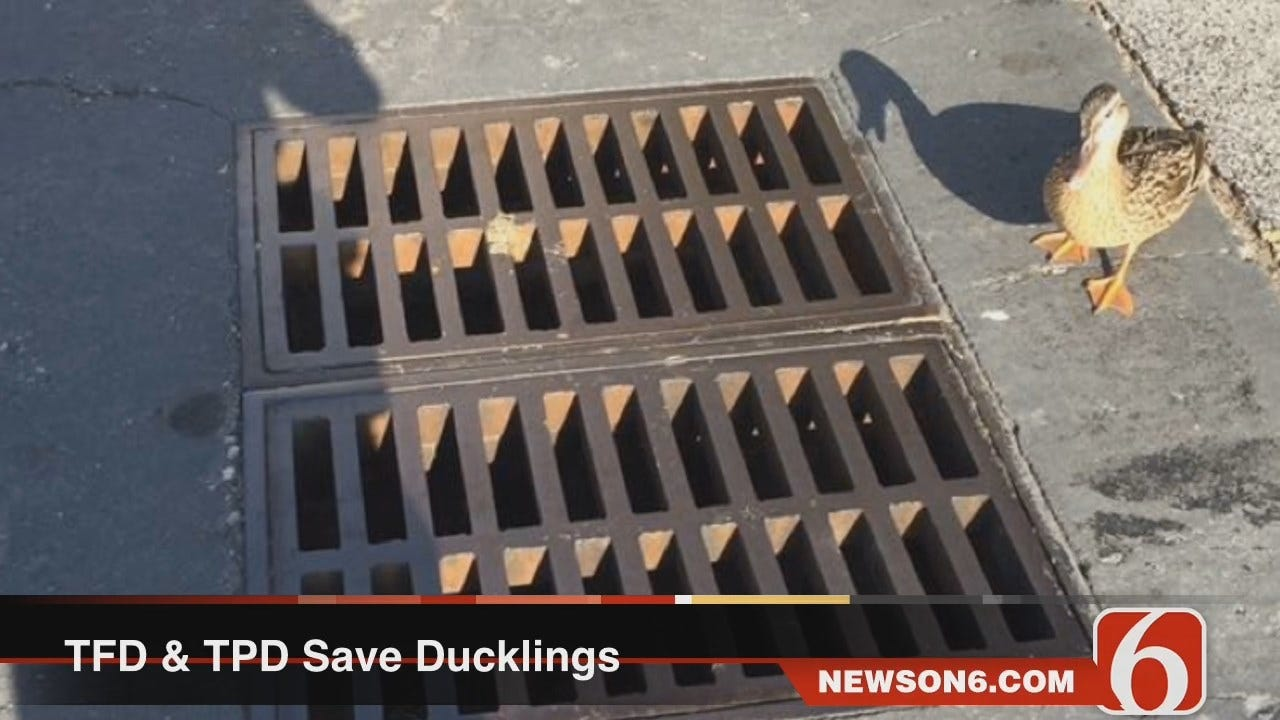 Melissa Hawkes: Tulsa First Responders Save A Dozen Ducklings