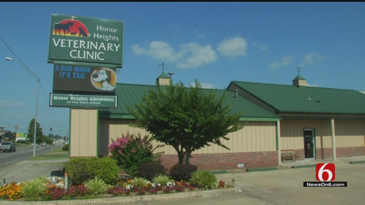Green Country Veterinarians Seeing Rise In Tick-Borne Illness Killing Cats