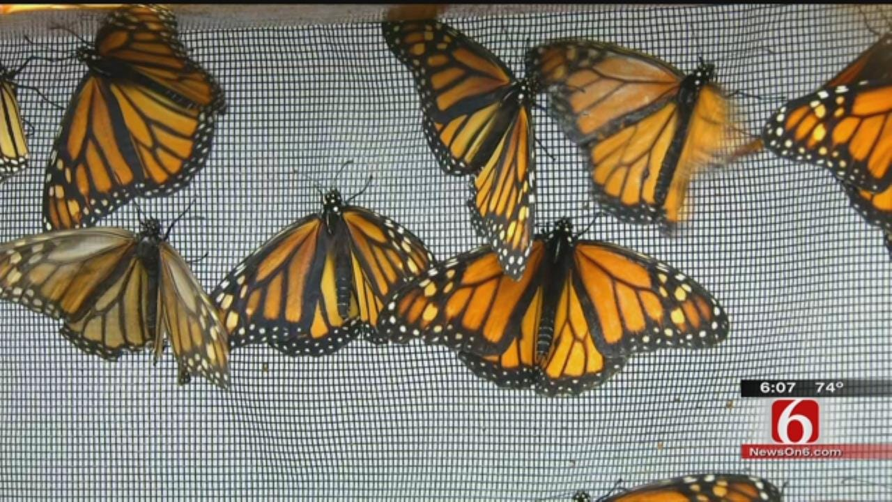 Tulsa Students Work To Save The Monarch Butterfly