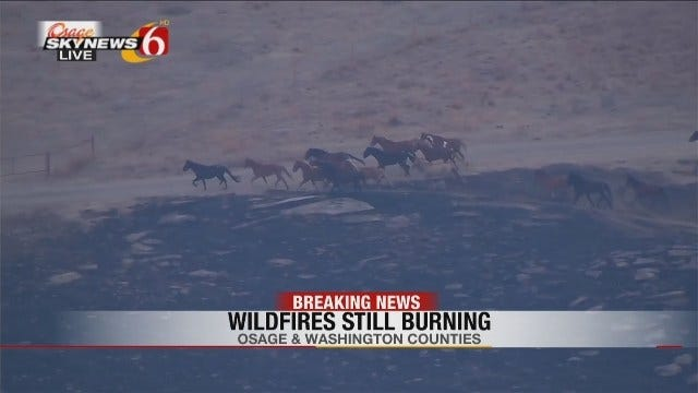 Wild Horses Escape Osage County Grass Fires