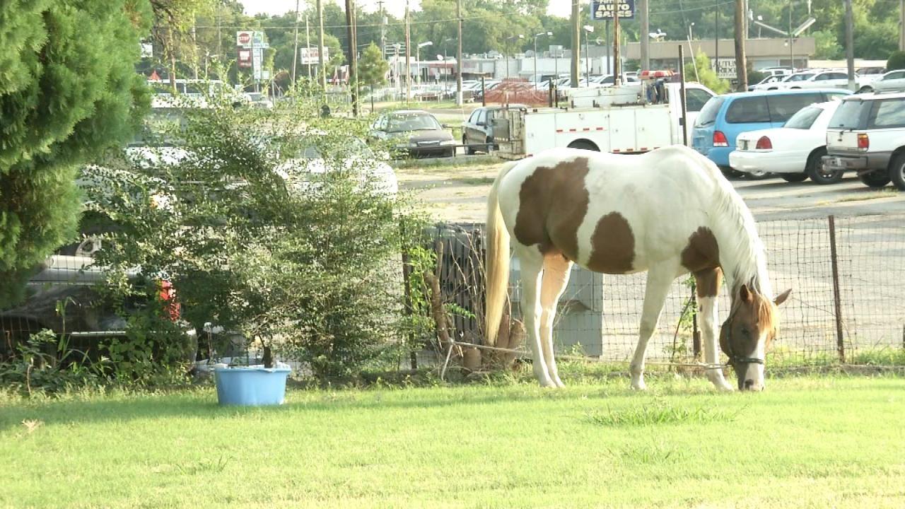 WEB EXTRA: Good Samaritans Wrangle Loose Horse In Tulsa