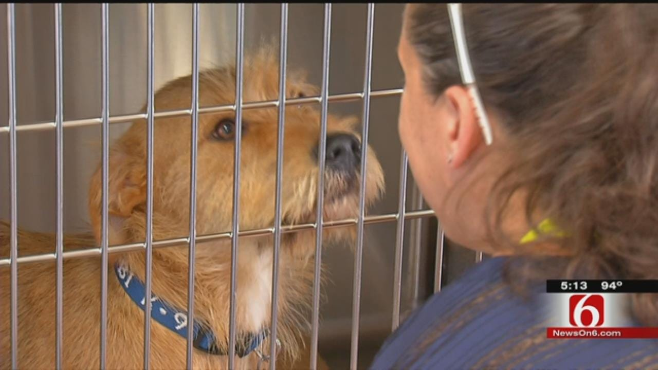 New Animal Adoption Center Opens At LaFortune Park