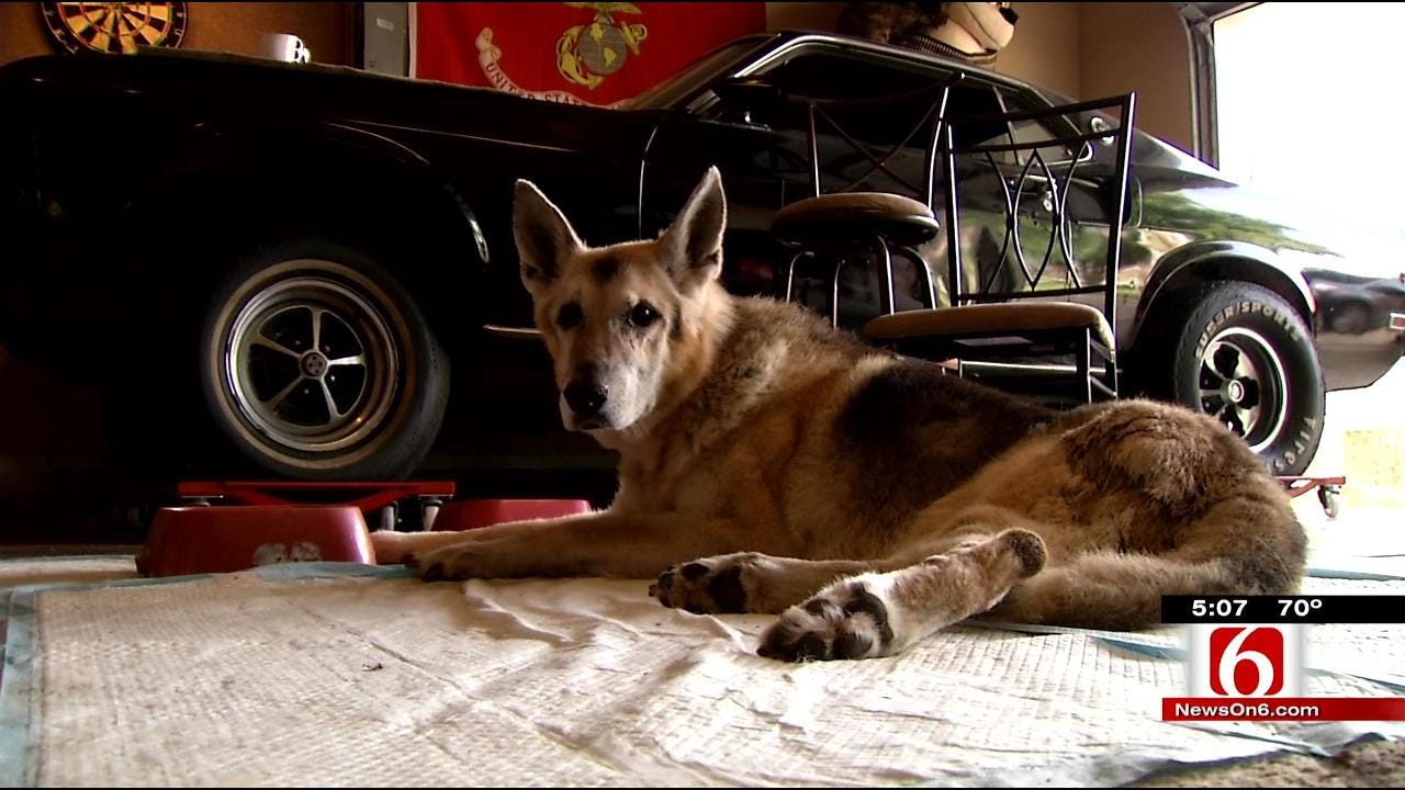 Retired Oklahoma Marine Dog Given Military Funeral