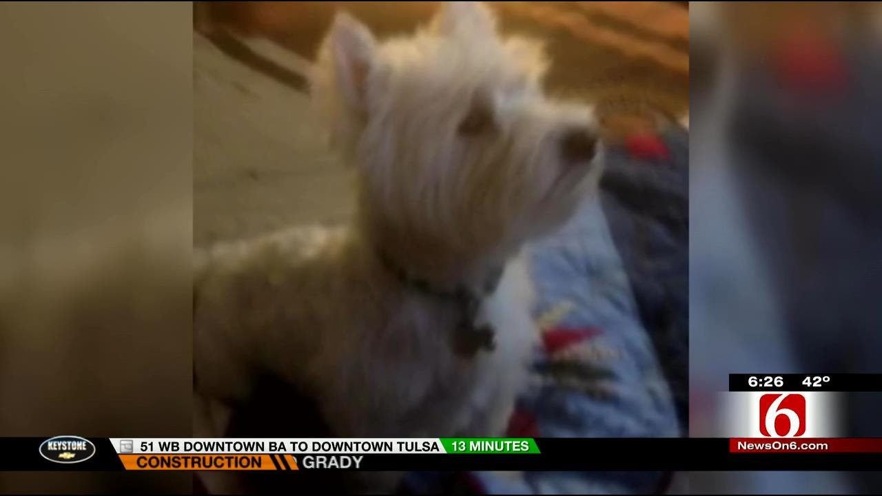 WEB EXTRA: Local Dog Loves Watching News On 6 Every Chance He Gets