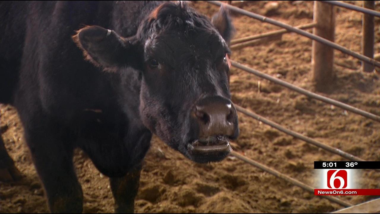 Muskogee Rancher Accused Of Animal Cruelty Denies Wrongdoing