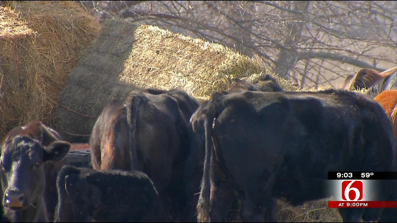 WARNING GRAPHIC CONTENT: Officials Find Dozens Of Dead Livestock In Muskogee County