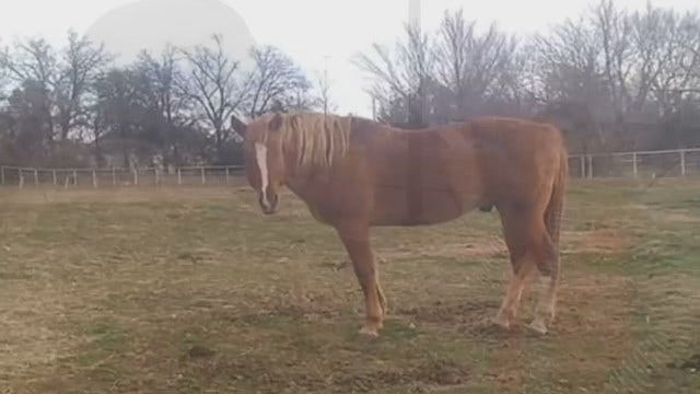 Oklahoma Veteran Finds Out Horse Died In Care Of 'Rescue' Ranch