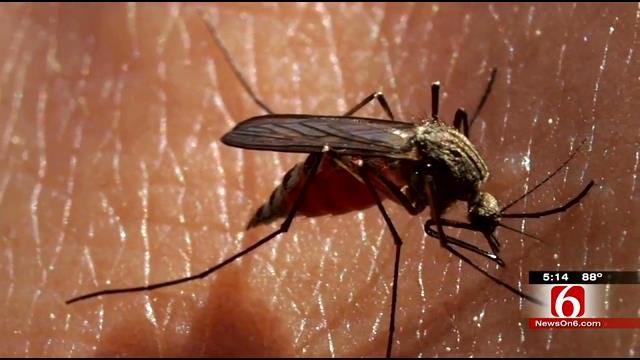 Tulsa Health Officials Warn Of Mosquito-Borne Virus, 'Chik-V'