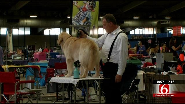 More Than 1,000 Dogs Compete At Tulsa's Roundup Dog Show