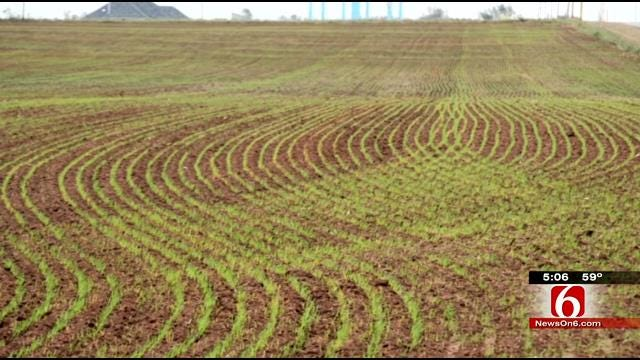 Oklahoma Wheat Harvest Suffering From Drought, Late Freeze