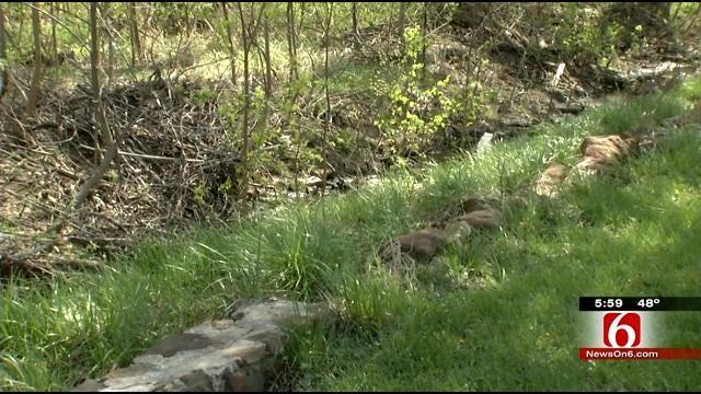 Police Fear East Tulsa Serial Rape Suspect Is Escalating