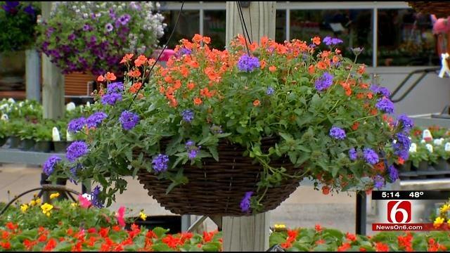 Oklahoma Gardeners Scramble To Protect Plants In Hard Freeze