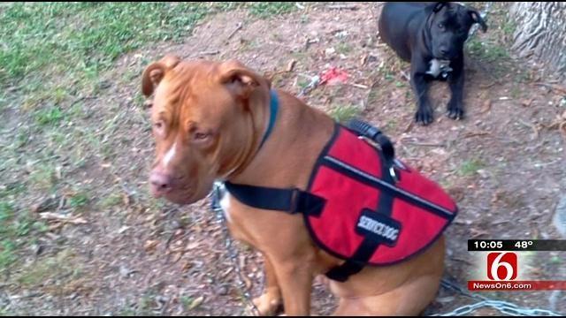 Tulsa Woman Looks For Stolen Service Dog