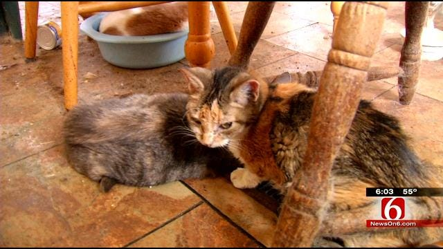 Dozens Of Cats Rescued After Broken Arrow Caretaker Found Dead