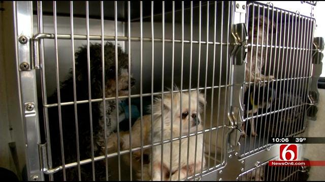 Over 100 Dogs Rescued From Sand Springs Puppy Mill