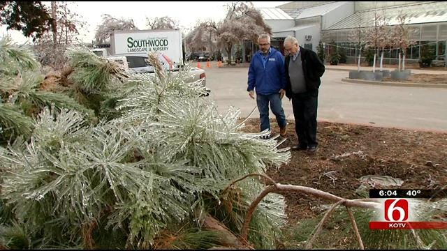 The Gardener Guy Offers Tips For Saving Trees Following Ice Storm