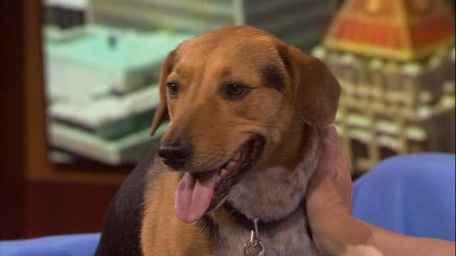 Radar, The News On 6 Weather Dog's 'Shelter Me' Video