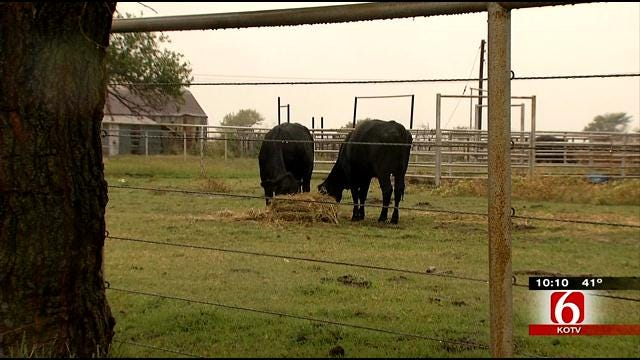 Nowata County Sheriff Investigating String Of Cattle Killings