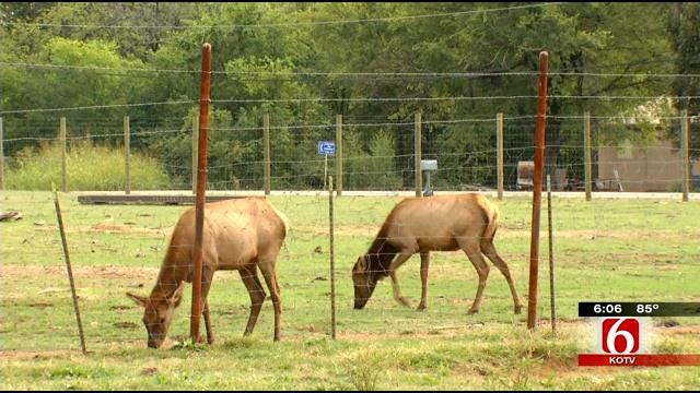 Reward Offered After Cherokee County Man's Pet Elk Is Shot