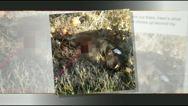 Tahlequah Teen's Alleged Dog Killing Post Goes Viral