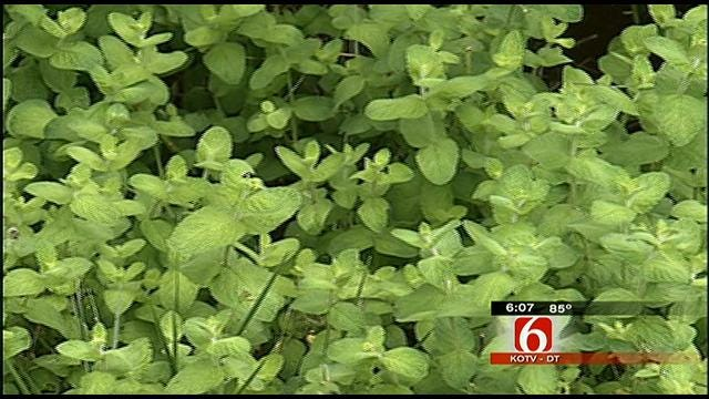 Woman Sues City of Tulsa For Cutting Down Her Edible Garden