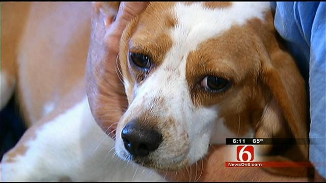 Checotah Animal Shelter Places Pups In Chicago