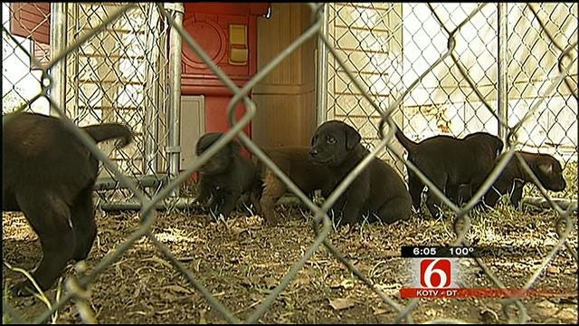 New Details Shed Light On Death Of Rogers County Family's Dog
