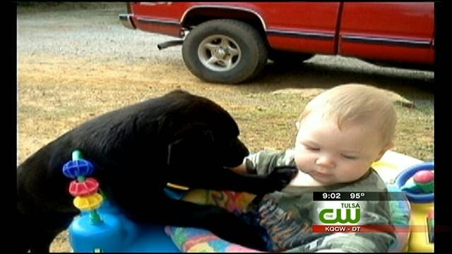 Reward Offered In Rogers County Dog's Dragging Death