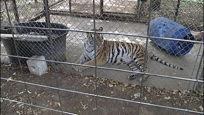 Safari's Exotic Animal Sanctuary Closes To Public