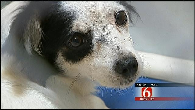 Tulsa Woman Jailed After 7 Dogs, 22 Cats Removed From Home