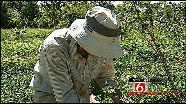 Oklahoma's Agriculture Industry Faces Need For Younger Farmers