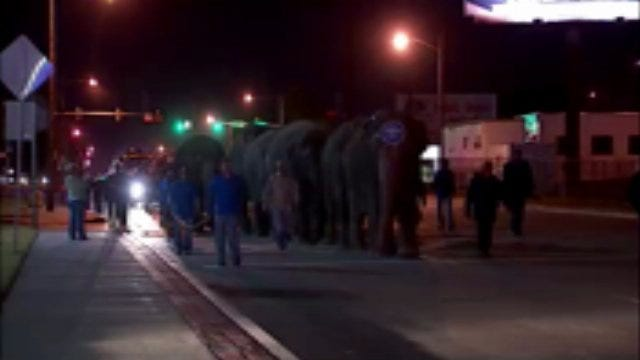 WEB EXTRA: Video Of Circus Elephants Walking In Downtown Tulsa