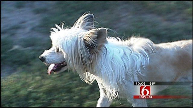 Animal Advocates Say Tulsa City Councilor Broke Promise