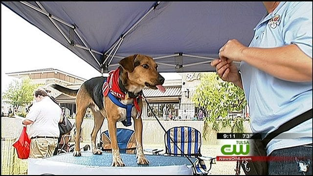 Pets, Owners Take Advantage Of Nice Weather For Woofstock