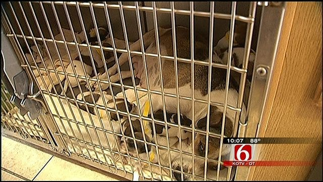 Tulsa Humane Society Rescues Nearly 30 Dogs From Indiana Hoarder