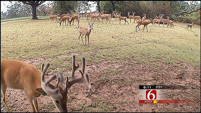 Someone Is Taking Aim At Animals In Green Country